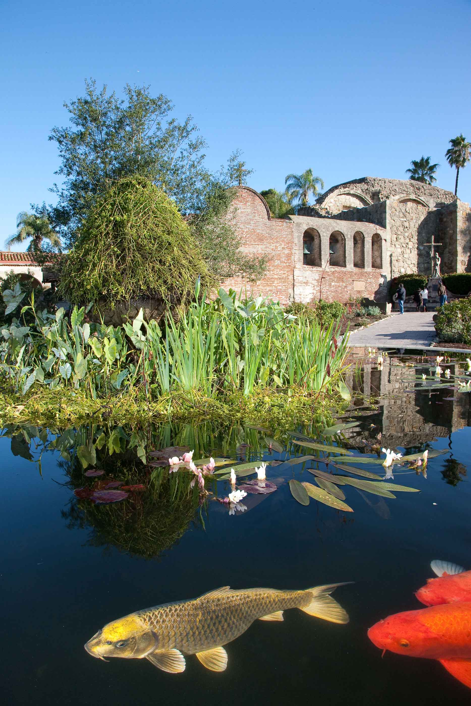 Coy Fish Pond at the San Juan Capistrano Mission